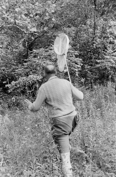 Vladimir Nabokov sedang berburu kupu-kupu!